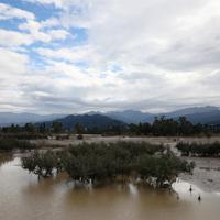 千曲川沿いで水没したリンゴ畑=長野市で2019年10月14日午前9時54分、佐々木順一撮影