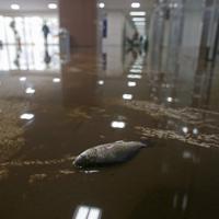 台風19号の影響で浸水した帝京安積高校の1階廊下で動けなくなった魚=福島県郡山市で2019年10月15日午前8時56分、和田大典撮影
