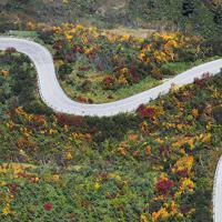 紅葉の見ごろを迎えた立山黒部アルペンルートの弥陀ケ原付近=富山県立山町で2019年10月9日、本社ヘリから木葉健二撮影