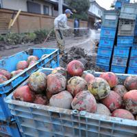 千曲川の氾濫で水に浸かり、廃棄処分となった特産品のリンゴ=長野市で2019年10月15日午後4時49分、宮武祐希撮影