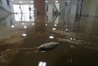 A dead fish is seen in a first floor corridor of Teikyo Asaka High School that was flooded due to Typhoon Hagibis, in the northeastern Japan city of Koriyama, Fukushima Prefecture, on Oct. 15, 2019. (Mainichi/Daisuke Wada)