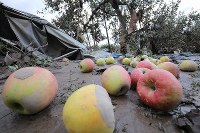 Apples are seen on muddy ground in an area hit by the flooding of the Chikuma River caused by Typhoon Hagibis, in the central Japan city of Nagano on Oct. 15, 2019. (Mainichi/Yuki Miyatake)