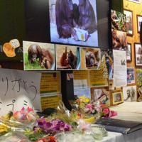 ジプシーをしのんで大勢のファンが花を手向けた=日野市の多摩動物公園で2017年10月2日、斉藤三奈子撮影