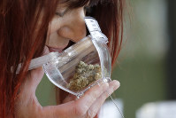 In this Oct. 9, 2019 photo, a customer sniffs a display sample of marijuana, in a tamper-proof container secured with a cable, sold at Evergreen Cannabis, a marijuana retail shop, in Vancouver, B.C. (AP Photo/Elaine Thompson)