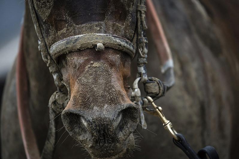 「馬は軽車両と一緒」との言い分だが・・・・・・(Bloomberg)