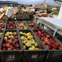 積み上げられた災害廃棄物の脇に置かれたリンゴ。泥がついてしまったままだ=長野市津野で2019年10月19日午前7時8分、小川昌宏撮影