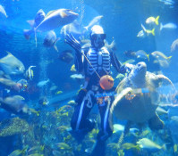 A diver in a skeleton suit feeds fish and a turtle during a Halloween event at Toba Aquarium in the city of Toba, Mie Prefecture, on Oct. 9, 2019. (Mainichi/Kazushige Hayashi)