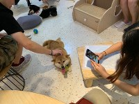 A Shiba dog is seen surrounded by customers at Dahuangjia in the Chaoyang District of Beijing, on Sept. 20, 2019. (Mainichi/Joji Uramatsu)