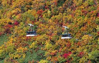 Colorful autumn leaves are seen in the Tateyama Kurobe Alpine Route in the central Japan town of Tateyama, Toyama Prefecture, from a Mainichi Shimbun helicopter in October 2019. (Mainichi/Kenji Konoha)