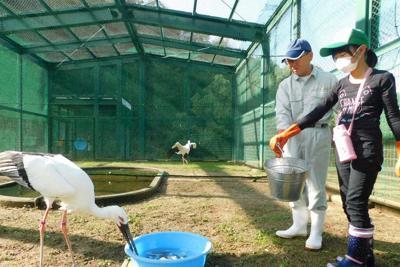 兵庫県立コウノトリの郷公園の飼育ゲージで、餌を与える参加者(右)=豊岡市祥雲寺で、村瀬達男撮影