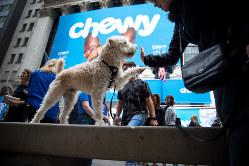 ニューヨーク証券取引所の前にたたずむ犬 Bloomberg