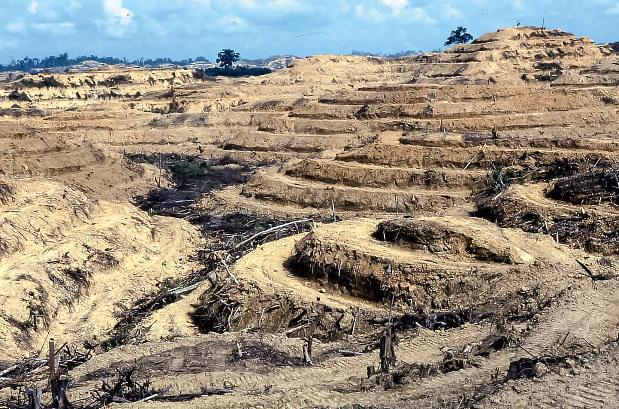 アブラヤシの農園開発のために伐採された山林(筆者撮影)