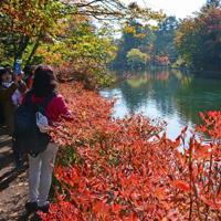 岸辺のドウダンツツジなどが赤く染まった雲場池=長野県軽井沢町軽井沢で