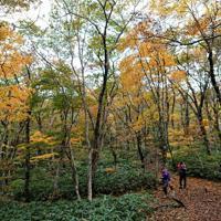 紅葉を撮影するハイキング客=庄原市で、渕脇直樹撮影