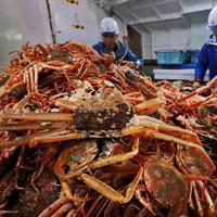 引き揚げたズワイガニを選別する漁師たち=兵庫県新温泉町沖で2019年11月6日午前6時10分、小出洋平撮影