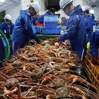引き揚げたズワイガニを選別する漁師たち=兵庫県新温泉町沖で2019年11月6日午前1時22分、小出洋平撮影