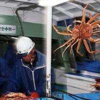 船上で選別されるズワイガニ=兵庫県新温泉町沖で2019年11月6日午前4時59分、小出洋平撮影