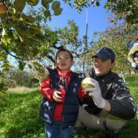 ボランティアの親子と共に、台風19号などの浸水被害から逃れたリンゴを収穫する徳永虎千代さん(中央)=長野市豊野で2019年11月9日午前10時42分、竹内紀臣撮影