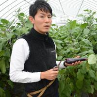 研修で栽培しているナスを手にする沢田石武瑠さん=秋田市仁井田の市園芸振興センターで