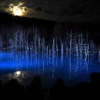 ライトアップされ幻想的に浮かび上がる青い池=北海道美瑛町で2019年11月11日、竹内幹撮影