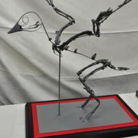 3Dプリンターで打ち出した化石で作った新種「フクイプテリクス・プリマ」の全身模型=福井県永平寺町の県立大で2019年11月14日午前11時18分、大森治幸撮影