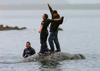 In this May 17, 1999, file photo, two Makah Indian whalers stand atop the carcass of a dead gray whale moments after helping tow it close to shore in the harbor at Neah Bay, Wash. (AP Photo/Elaine Thompson)