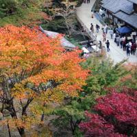 色づき始めた書写山円教寺の境内=姫路市書写で、花牟礼紀仁撮影
