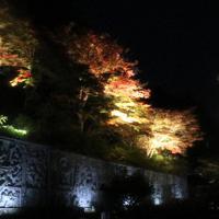 ライトアップされている紅葉=高取町の壺阪寺で、藤原弘撮影