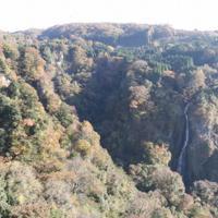 大吊橋の上から見える九酔渓の紅葉