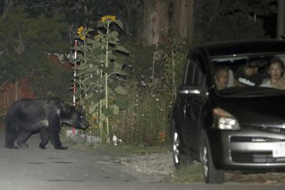 住宅街をうろつくヒグマ(左奥)。右の自動車には人が乗っていて距離は近い=札幌市南区で2019年8月13日午後7時36分、貝塚太一撮影