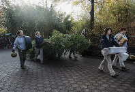 Smithsonian National Zoo employees carry bamboo to a FedEx transport truck as giant panda Bei Bei departs the Smithsonian National Zoological Park on Nov. 19, 2019, in Washington. (AP Photo/Michael A. McCoy)