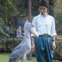 ちょっとした仕草が来園客を引きつけるハシビロコウと松本和人さん=千葉市動物公園で、谷本仁美撮影