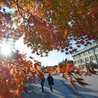 赤く色づいた宮内庁前の紅葉=皇居で2019年11月30日午前8時19分、手塚耕一郎撮影