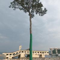 大津波に耐えた高田松原の一本松=岩手県陸前高田市で2011年5月20日、武市公孝撮影