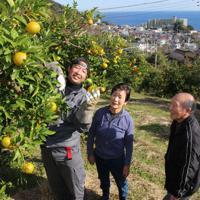 はさみで収穫したダイダイの果実を倉田さん夫妻に見せる岡野谷さん(左)=静岡県熱海市上多賀で