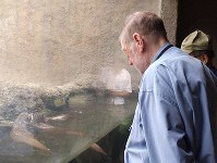 山口県宇部市のときわ動物園でカワウソを見るニコルさん=C.W.ニコル・アファンの森財団提供