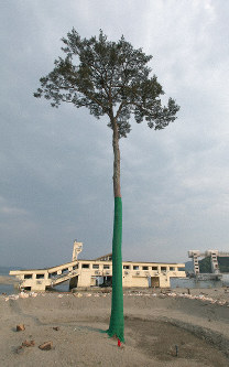 This file photo taken on May 20, 2011 shows a single standing pine which survived the tsunami following the Great East Japan Earthquake in the Iwate Prefecture city of Rikuzentakata, in northeastern Japan. (Mainichi/Kimitaka Takeichi)