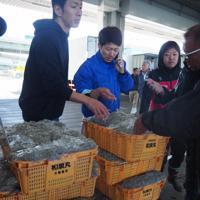 運んだシラスを検品する若手の漁師や加工業者=大阪府岸和田市で2019年11月15日午前11時28分、加藤美穂子撮影