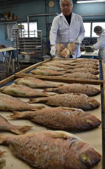 Yasunari Ogawa, president of Sanwa Suisan, places baked red sea bream in containers at the company in Owase, Mie Prefecture, on Dec. 3, 2019. (Mainichi/Emi Shimomura)