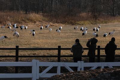 タンチョウを観察して個体状況を記録する中学生たち=北海道鶴居村の鶴見台で