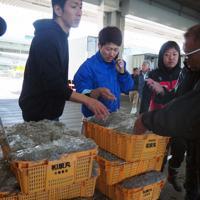 運んだシラスを検品する若手の漁師や加工業者=大阪府岸和田市で、加藤美穂子撮影