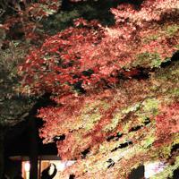 ライトで浮かび上がる六義園の紅葉=東京都文京区で2019年12月、梅村直承撮影