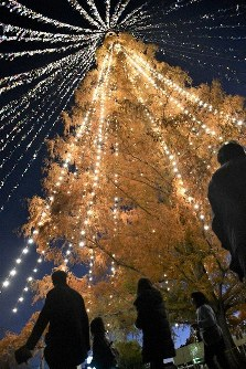 Message cards tied with string hanging from the top of a dawn redwood reflect the light from illuminations on the tree at the municipal Nakasu Elementary School in the western Japan city of Moriyama, Shiga Prefecture, on Dec. 8, 2019. (Mainichi/Kenichi Isono)
