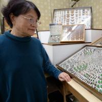 展示されている昆虫標本を見る清水信子さん=新潟県南魚沼市六日町で