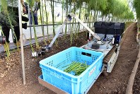 A harvesting robot is seen choosing and picking asparaguses ready for harvest in a greenhouse in Tara, Saga Prefecture, on Oct. 16, 2019. (Mainichi/Mio Ikeda)
