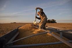 ウクライナなどに押される米国のトウモロコシ(イリノイ州)(Bloomberg)