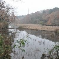崩れた再生土によって川の流れがせき止められ、冠水したままの草地。近くには住宅地が広がる=千葉県酒々井町馬橋で