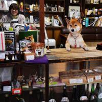 カウンターで客を迎える福=奈良市で、猪飼健史撮影
