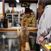 常連客を出迎える福=奈良市で、猪飼健史撮影