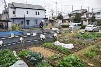 Shinichi Ishida, an employee of Seed Town Management, looks after community farmland that the company leases to local residents in Naka Ward, in the Osaka Prefecture city of Sakai. (Mainichi/Yuta Kumamoto)